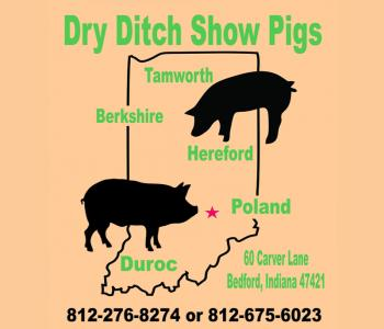 Image Dry Ditch Show Pigs